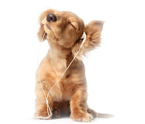conseils chiens